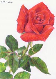 トンボNQ で描いたバラ